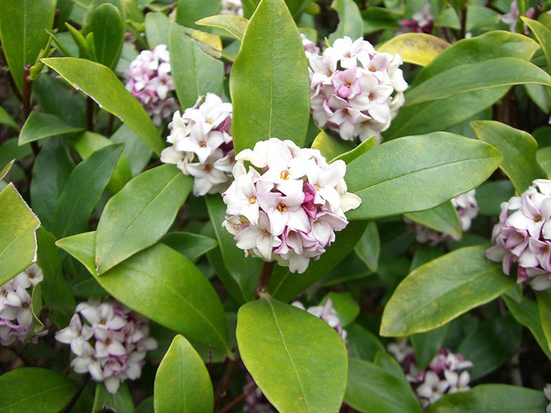 Garden scents in Spring