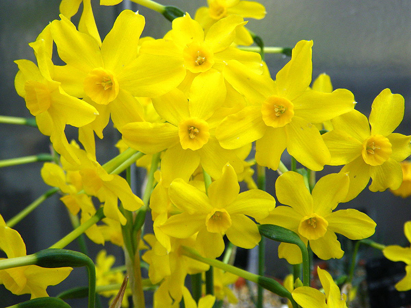 what to plant for a spring sale