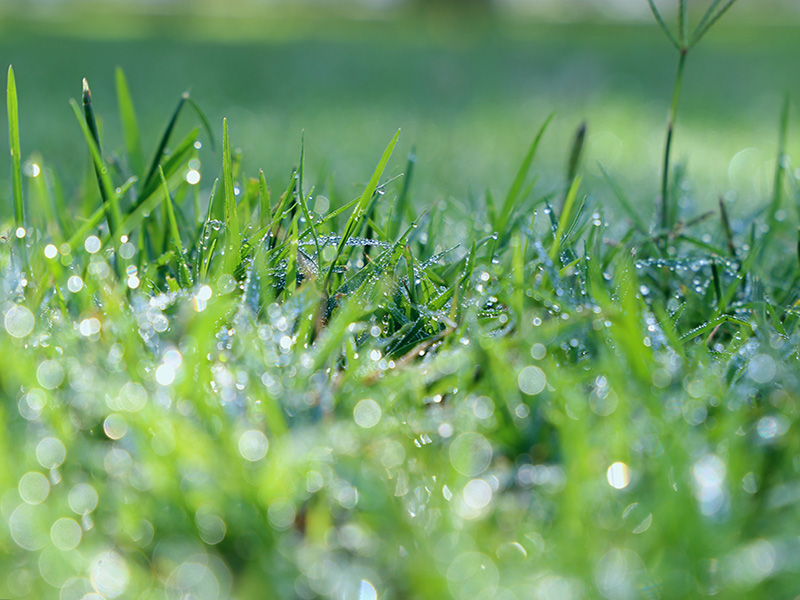 thriving lawns for winter