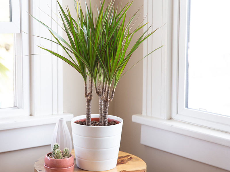 Adding greenery to your home