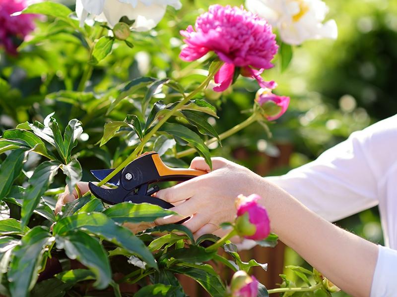 autumn garden tips